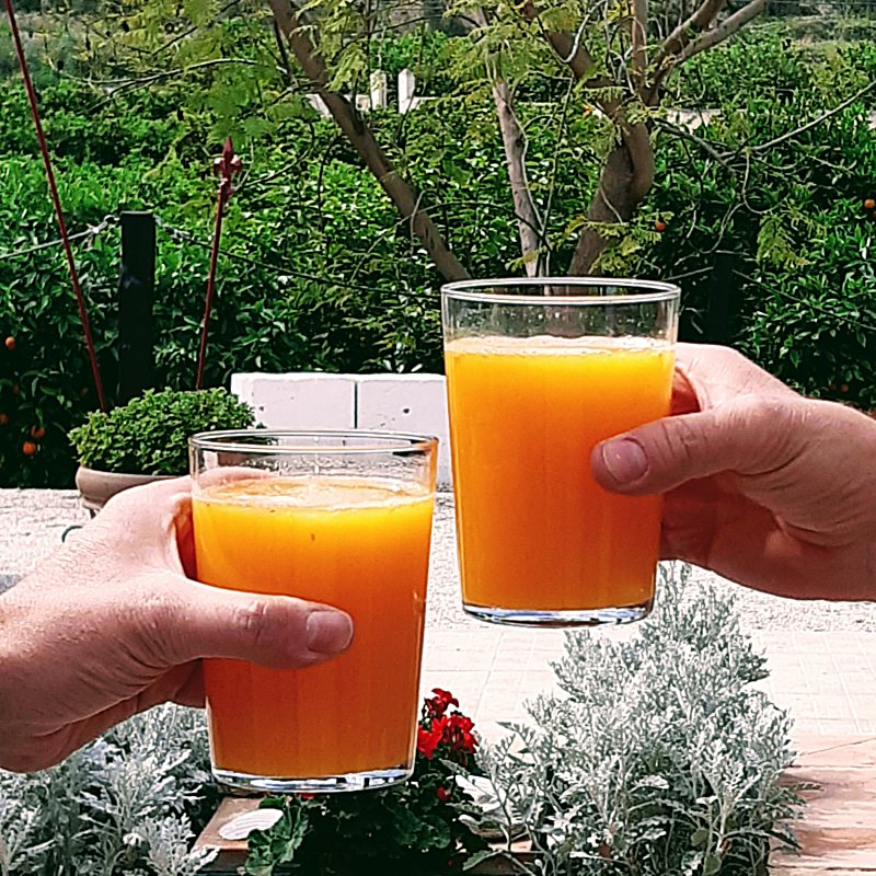 Orange juice, the best antioxidant to start the day enjoying a refreshing juice of oranges, pink grapefruits or lemons, freshly picked from the tree and freshly squeezed.