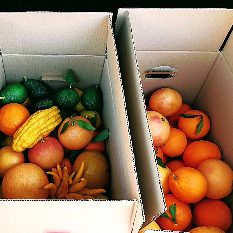 Home delivery of citrus fruits,